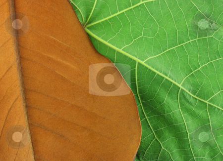 Old and New stock photo, Richly toned brown leaf overlapping a vibrant green leaf. by Mark Carrel