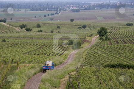Vineyards stock photo, French vineyards in the Alsace area. A small farmer truck is driving down a curved road to work in the fields. by Anders Peter