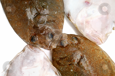 Flounder fishes stock photo, Four head of fresh flounder fishes from two sides on white background by Nataliya Taratunina
