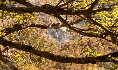 Beginning Autumn stock photo, Beginning autumn in the mountains and forests of the Vall de Ar??n by Juan Egert