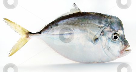 Fresh fish stock photo, Fresh fish on white background by Nataliya Taratunina