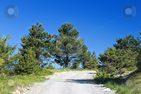 Strada sterrata di montagna stock photo, Dirty mountain road under bright blue sky with plants and trees by ANTONIO SCARPI