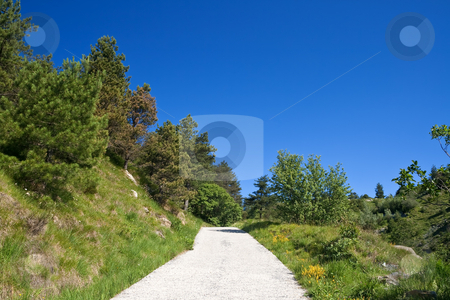Dirt road stock photo, Dirty mountain road under bright blue sky with plants and trees by ANTONIO SCARPI