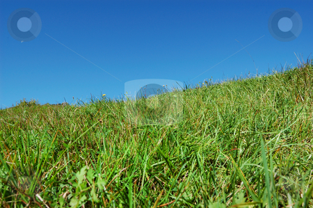 Grass and sky stock photo, Green Grass and blue sky background by ALESSANDRO TERMIGNONE