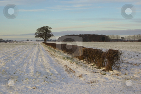 Winter hedgerow stock photo, A snowy winter hedgerow and fields under a cold blue sky by Mike Smith
