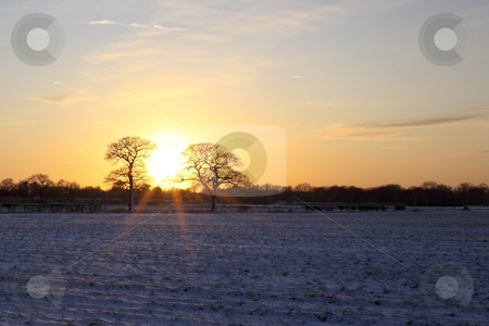 Sunburst and tree stock photo, An evening sunburst through a tree in a snowy winter hedgerow by Mike Smith