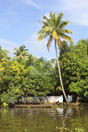 Keralan backwaters stock photo, A single palm tree by a river in the beautiful keralan backwaters by Mike Smith