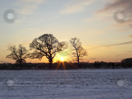 Three trees on a winters evening stock photo, A snowy field with hedgerows and a trees on a cold winters day by Mike Smith