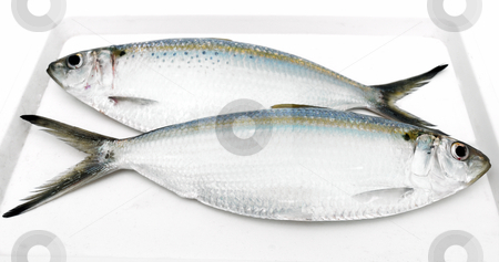Two fresh fishes stock photo, Two fresh sea fishes on a white support by Nataliya Taratunina