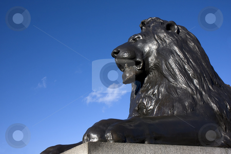 Lion of Trafalgar stock photo, Close up of one of the bronze lions at Trafalgar Square, London, England. by Darren Pattterson