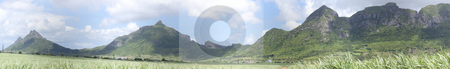 Stock Photo of panoramic view of sugarcane field  stock photo, Tropical panoramic view of sugarcane plants with the Moka range mountainon the background by Gowtum Bachoo