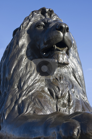 Trafalgar lion front on  stock photo, Close up of one of the bronze lions at Trafalgar Square, London, England. by Darren Pattterson