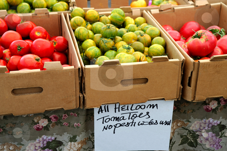 Boxed Heirloom Tomatoes stock photo, Boxes of different kinds of tomatoes for sale at an outdoor market with a sign stating no pesticides were used by Lynn Bendickson