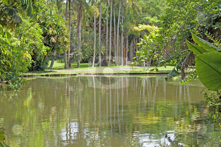 Pamplemousses botanical lake pool  stock photo, Pools and ponds in the botanical garden of Pemplemousse on the tropical island of Mauritius. by Gowtum Bachoo