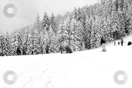 Skier on snowy mountainside stock photo, Skiers on snowy mountainside with pin forest in background. by Martin Crowdy