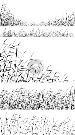 Reed foregrounds stock vector clipart, Set of editable vector silhouettes of reed fringes by Robert Adrian Hillman