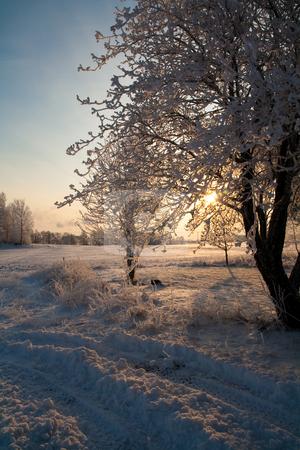 Snowy Tree stock photo,  by Tijs Zwinkels
