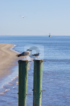 Gulls and Shrmpboat stock photo, Seagulls on two posts with a shrimp boat in the background by Darryl Brooks