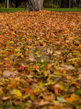 Autumn (fall) leaves in Rosenstein Park, Stuttgart stock photo, Autumn (fall) leaves in Rosenstein Park - Stuttgart, Germany by Richard Williamson