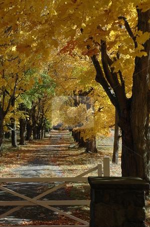 Autumn Scenes stock photo, Autumn, foliage by Richard Sheehan