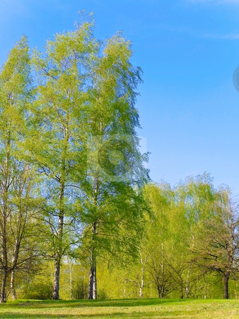 Spring landscape stock photo, Photo of the spring landscape with blue sky and green trees by Sergej Razvodovskij