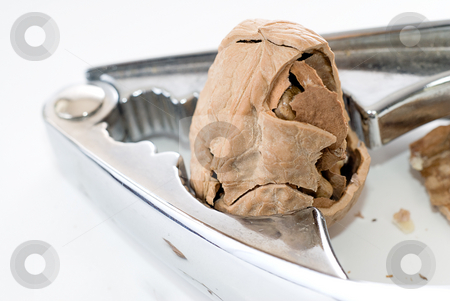 Partially Cracked Walnut stock photo, A partially cracked walnut being cracked by a nutcracker, shot on white by Richard Nelson