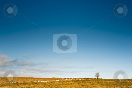 Horizon with a tree stock photo, Simple horizon with a tree and blue sky by Juraj Kovacik