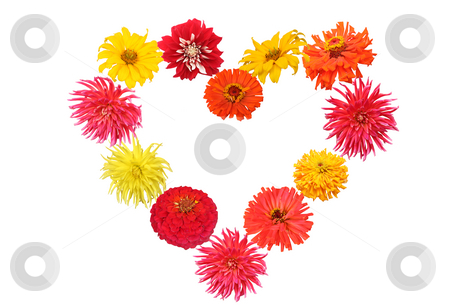 Flower heart stock photo, Heart shaped spring flowers. Red. orange. yellow and pink dahlia, zinnia and daisy. Isolated on white by Olga Lipatova