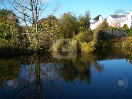 Sunny reflection stock photo, Some shrubbery reflected in water on a sunny summer morning by Michael O'Connell