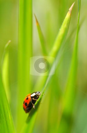 Ladybug stock photo, An uphill struggle for a tiny ladybug by Steve Mann