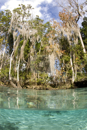 Crystal River Scenic stock photo, Over under scenic of the crystal clear water in Crystal Springs Florida by A Cotton Photo