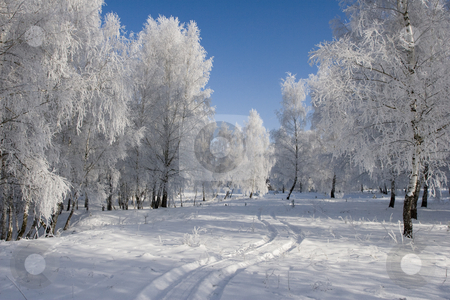 Winter Landscape stock photo, Sunny winter day in the forest. by Tamas Vargyasi