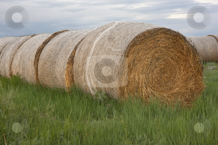 Hay bales and green grass stock photo, A row of round hay bales on a green meadow by Marek Uliasz