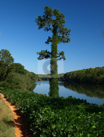 River view stock photo, A view of the Catawba River with a tree covered by Kudzu by Tim Markley