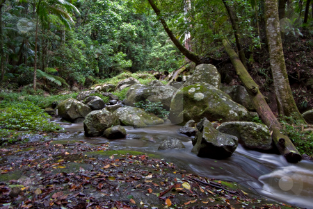 Rainforest stock photo, Beuatiful rainforest of the world heritage listed border ranges national park by Phil Morley