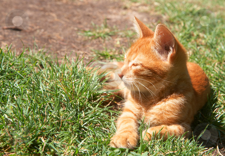 how to use kitten cut and polish
