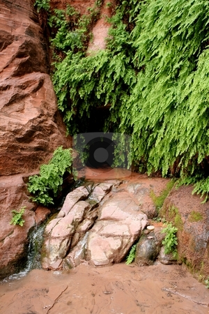 Vegetation at desert spring stock photo, Plant life grows around a spring in the desert by Greg Peterson