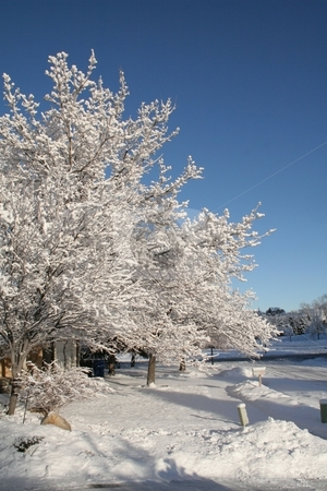 Winter scene on a sunny day stock photo, Snow covered tree on a sunny day by Greg Peterson