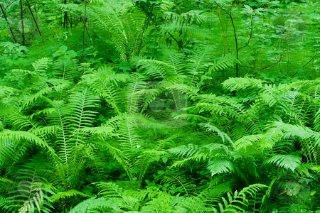 Fern stock photo,  by Bo Valentino