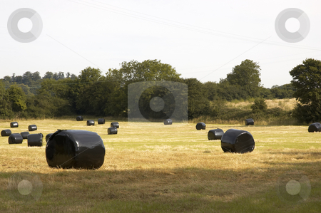 Hay Bales stock photo, A hay bale.covered in black plastic in a field by Mark Bond