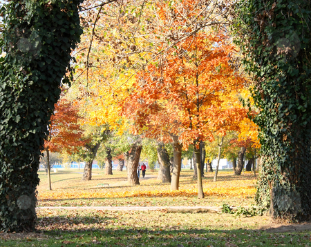 Colors of autumn stock photo, Colors of autumn, red and yellow foliage on trees by Borislav Marinic