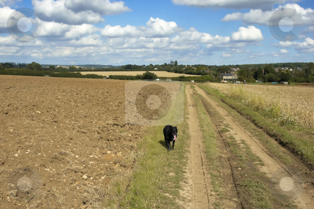 Dog walking stock photo, A dog walking in the countryside by Mark Bond