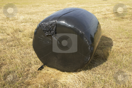 Plastic bale stock photo, A hay bale.covered in black plastic in a field by Mark Bond