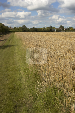 Summer fields stock photo, A grass track by a field of Wheat by Mark Bond