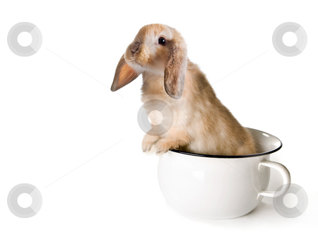 Potty rabbit stock photo, Adorable brown easter bunny in a toilet pot or potty by Anneke