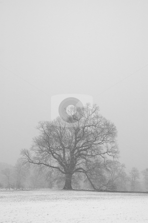 Winter stock photo, A view of trees in winter with snow falling by Mark Bond
