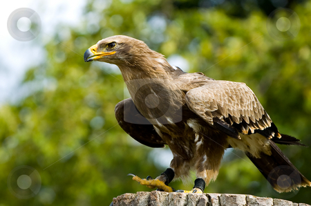 Stone eagle sitting on a tree trunk stock photo, Stone eagle sitting on a tree trunk by Marcel Paschertz