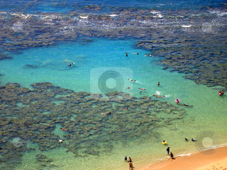 Aerial view of Snorkelers and Families swimming around the coral stock photo, Snorkelers and Families swimming around the coral at Hanauma Bay, Oahu, Hawaii by Cloudia Newland