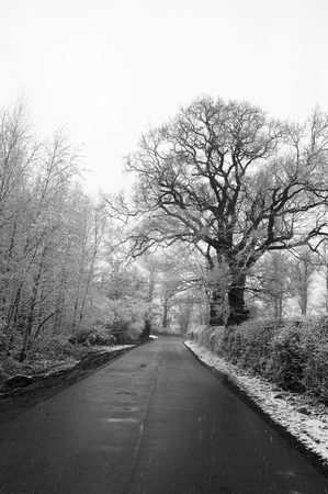 Winter lane stock photo, Black and white photo of a country lane in winter by Mark Bond
