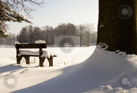 Wooden bench and big tree stock photo, Wooden bench in park and big tree. Winter time. In Background lake. by Tomasz Parys